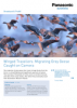 Winged Travellers—Migrating Grey Geese Caught On Camera
